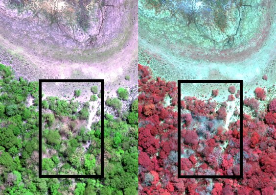 Red-Green-Blue (left)  and Colorinfrared (right) View of Multispectral Data (10 cm)